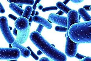 Researchers Create New Probiotic Beer That Boosts Immunity
