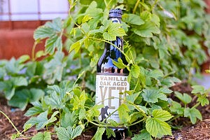 Great Divide May Beer Releases