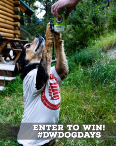 Instagram Contest: Dog Days of Summer
