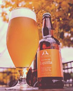 Brewer's Spotlight: Lupzilla with El Dorado